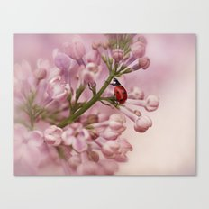 Ladybird on Lilacs Canvas Print