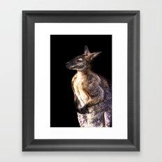 Red Kangaroo Framed Art Print