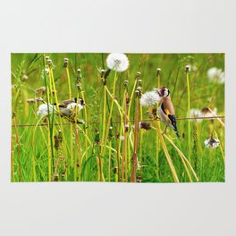 Europan goldfinch in late Spring Rug