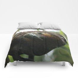 Kaka : New Zealand Endemic Comforters