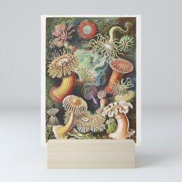Actiniae–Seeanemonen from Kunstformen der Natur Mini Art Print