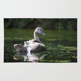 Mute Swan Cygnet Rug