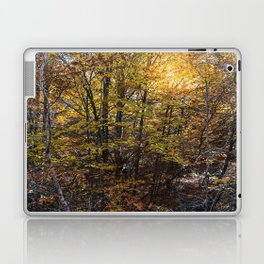 Beech forest in Autumn Laptop & iPad Skin