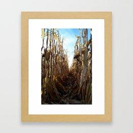 Corn Fields Framed Art Print