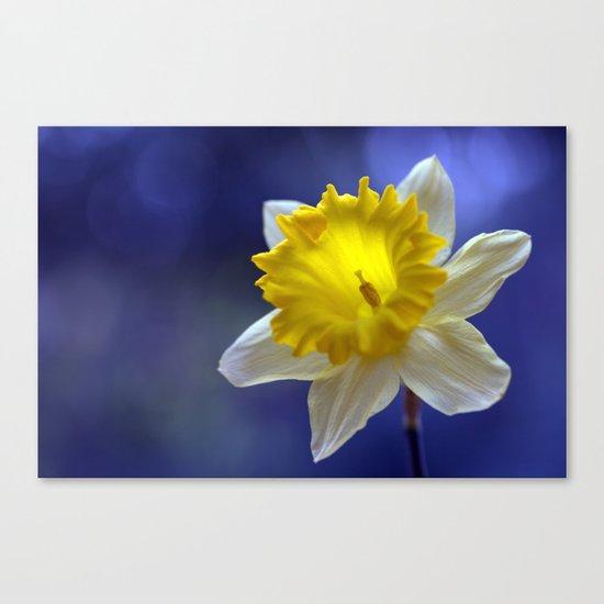 Daffodil in blue 9854 Canvas Print