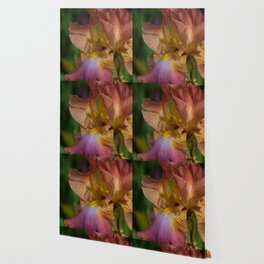 Iris Dreams Wallpaper
