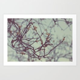 Flaking petals Art Print