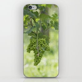 Bunch of grapes on vineyard iPhone Skin