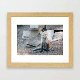 Baby fox in front of the shed Framed Art Print