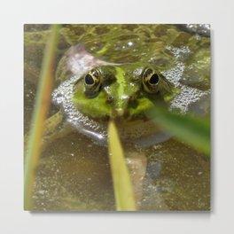 The Frog 518 Metal Print