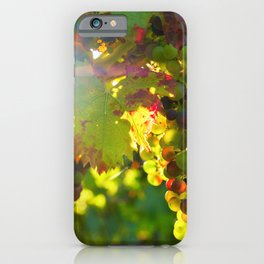 Wine Grapes in the Sun iPhone Case