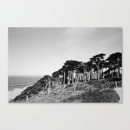 The Sutro Baths Trees Canvas Print