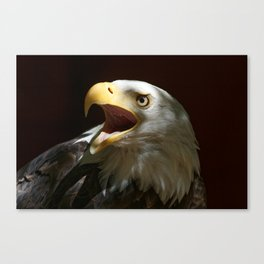 Bald Eagle | Call of the Wild | Eagles| Wildife | Eagle Art | Eagle Photography Canvas Print