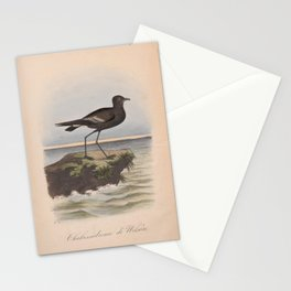 164 2 Wilsons Petrel thalassidroma wilsonii4 Stationery Cards