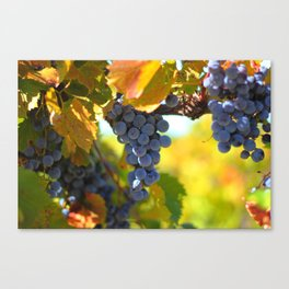 The Harvest - Grapes II Canvas Print