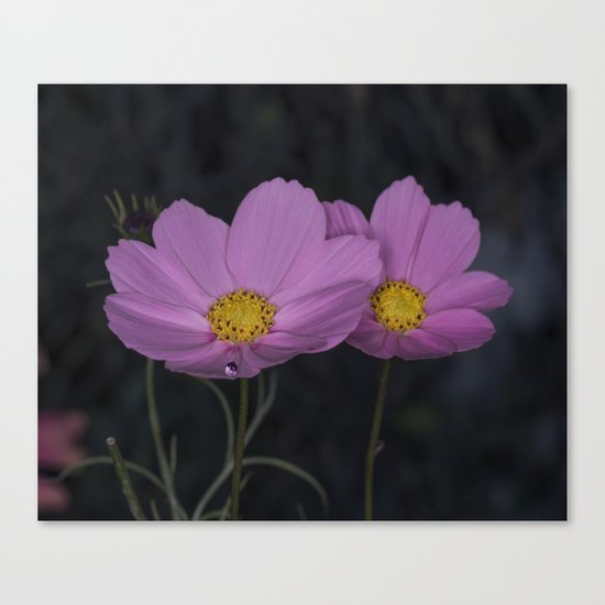 Cosmos water drop Canvas Print