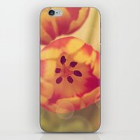 forever young iPhone & iPod Skins featuring Forever Young by Oh, Good Gracious!