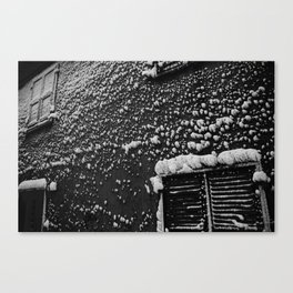 PRETTY PLEASE WITH SNOW ON TOP Canvas Print