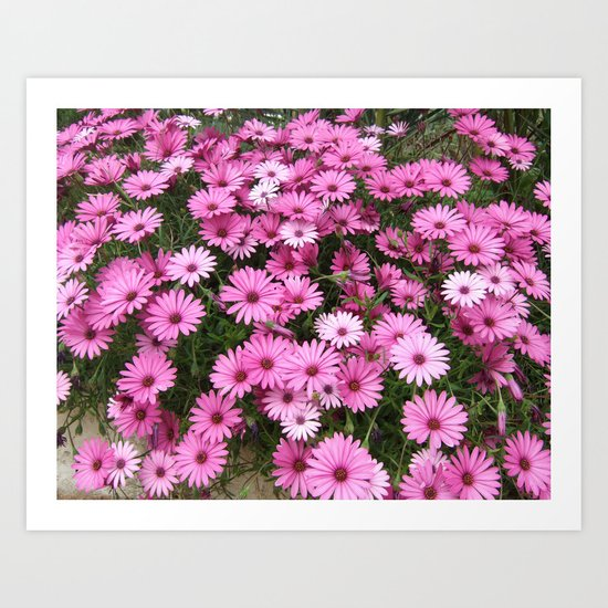 DAISIES IN PINK Art Print