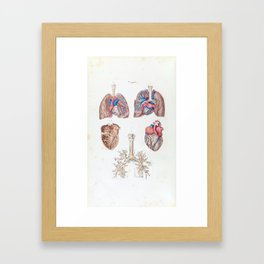 Vintage Anatomy of Human Heart and Lungs Framed Art Print