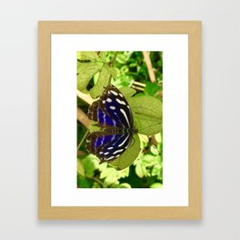Butterfly WIshes Framed Art Print