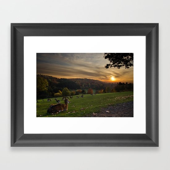 Serenity at Freisen Wildpark Framed Art Print