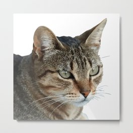 Stunning Tabby Cat Close Up Portrait Isolated Metal Print