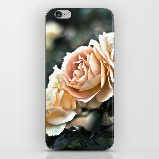 """Flower Art - Sunset Floral Print - Coral Pink, Peach, Yellow - Shabby Chic Art - """" Three Roses"""" iPhone & iPod Skin"""