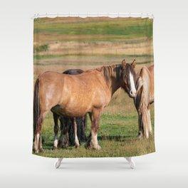 Gypsy Vanner Horses 0271 - Colorado Shower Curtain