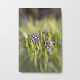 woodland bluebells Metal Print