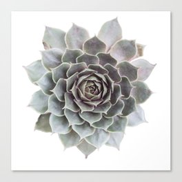 Succulent burst Canvas Print