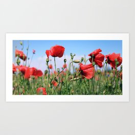poppy flower no13 Art Print