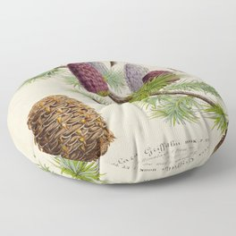 Pine Cone Larix Griffithii Vintage Botanical Floral Flower Plant Scientific Illustration Floor Pillow