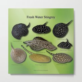Amazon freshwater stingray Metal Print