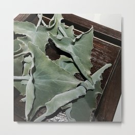 My fluffy leaves Metal Print