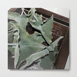 My fluffy leaves Metal Print