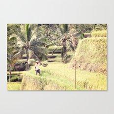 BALI SERIES - RICE FIELD Canvas Print
