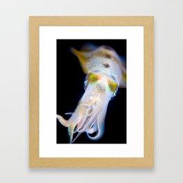 Squid #1 Framed Art Print