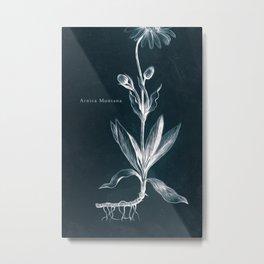 Cyanotype - Arnica Montana - Cropped Metal Print