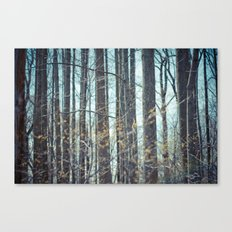 Forest of Trees. Canvas Print