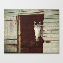 Peekaboo Mare // Horse Canvas Print
