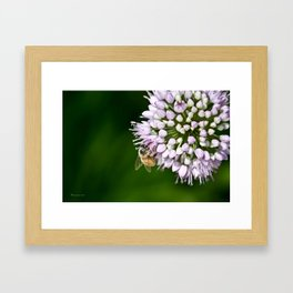 Honey Bee And Lavender Flower Framed Art Print