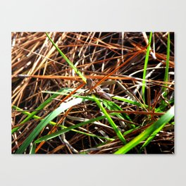 Grasshopper Canvas Print