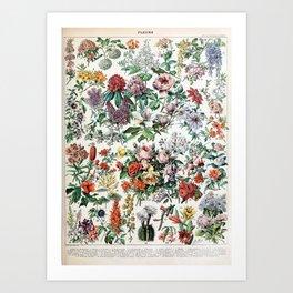 Adolphe Millot - Fleurs C - French vintage poster Art Print