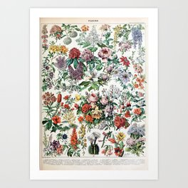 Adolphe Millot - Fleurs C - French vintage poster Art Print
