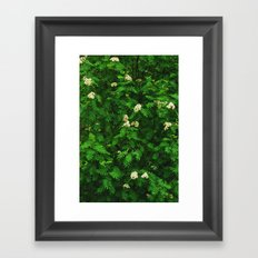 Greenery II Framed Art Print