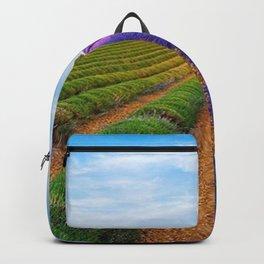 Lavender Province, Valensole, France Backpack