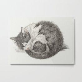 Curled up, sleeping cat Metal Print