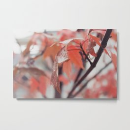 Maple Leaves After Rain Metal Print