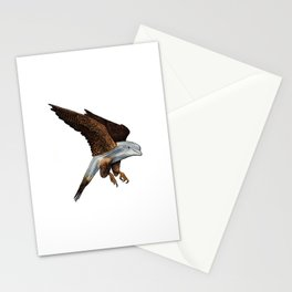 Peregrine Dolphin Stationery Cards